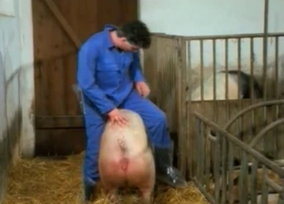 Two pink pigs have nice sex in the barn
