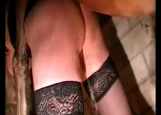 Stockings-clad bitch takes horse cock