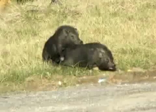 Two passionate wild animals fuck in the doggy style
